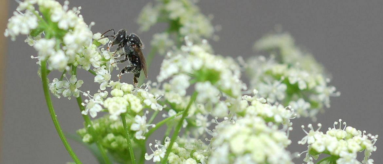 Pollinator 900