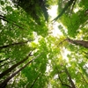 Trees_Ellsworth
