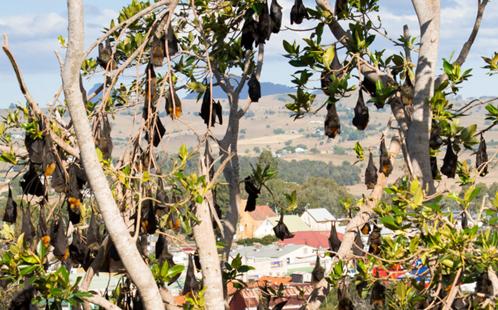 Bats on trees