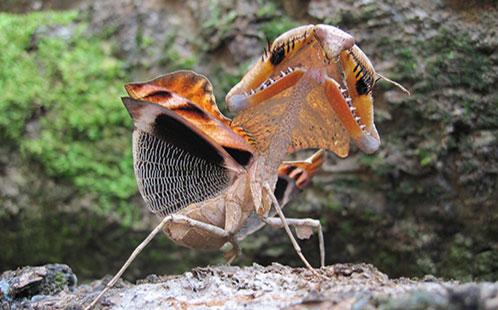 Praying Mantis (Dr James O'Hanlon)