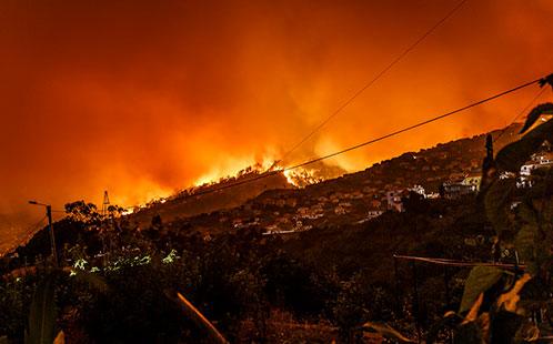 Bushfire Scene 498x310