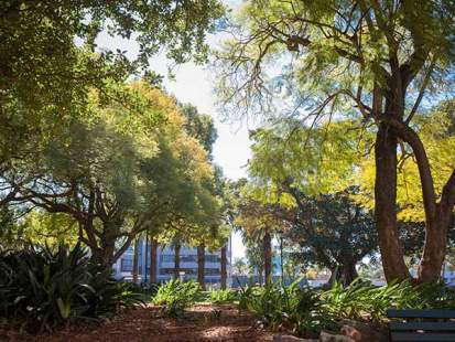 Parramatta City Campus - Trees