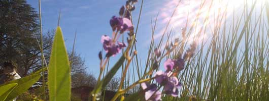 Cumberland Plain plant species