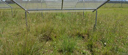 DRI-GRASS Landscape