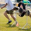 A man running next to a dog jumping through a hoop