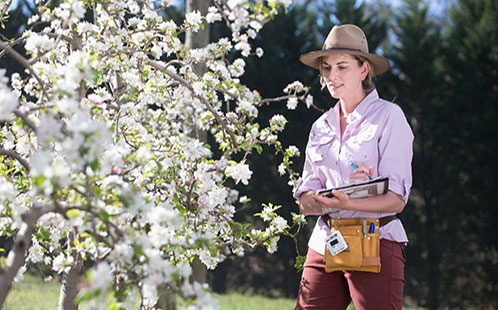 Dr Amy Gilpin in an apple orchard at Bilpin NSW