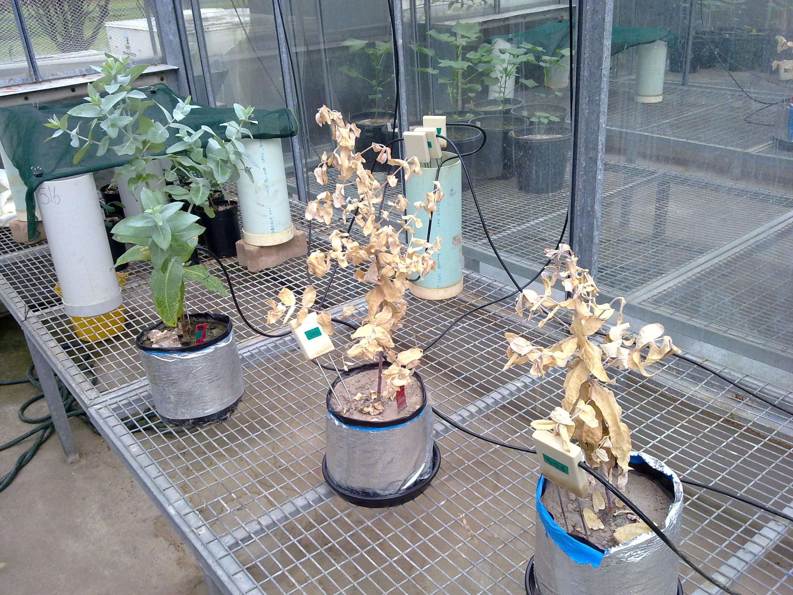 Project - What Kills Plants