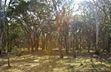 Australian native bush