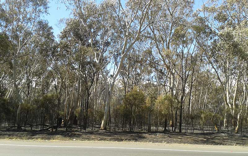 Burnt out bushland at Windsor following the September 2013 fires