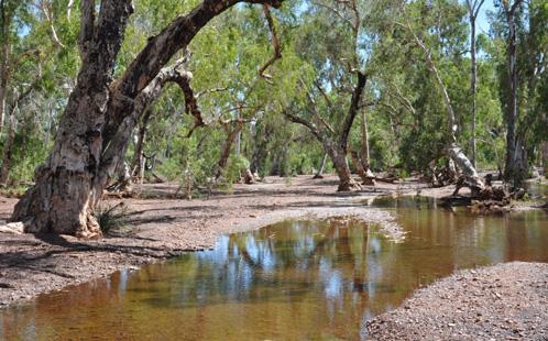 Trees in the Pilbara