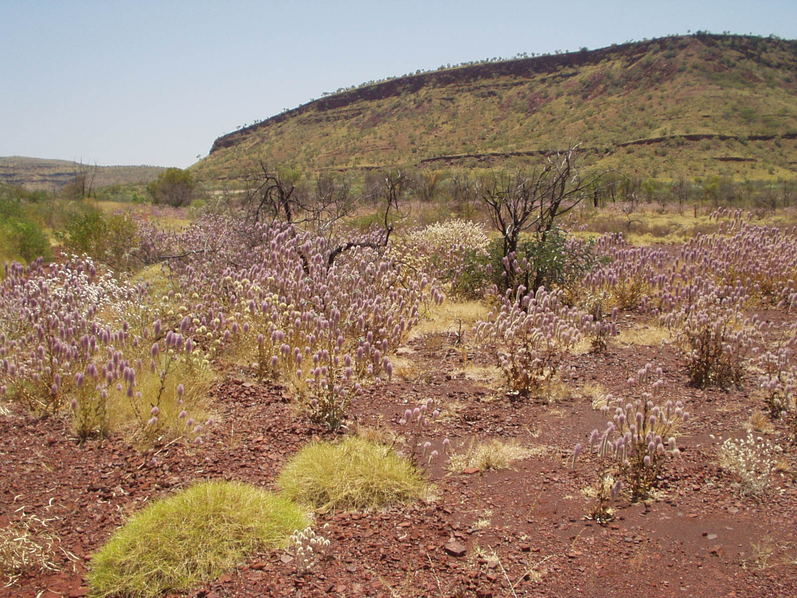 Spinifex Country, The Pilbara