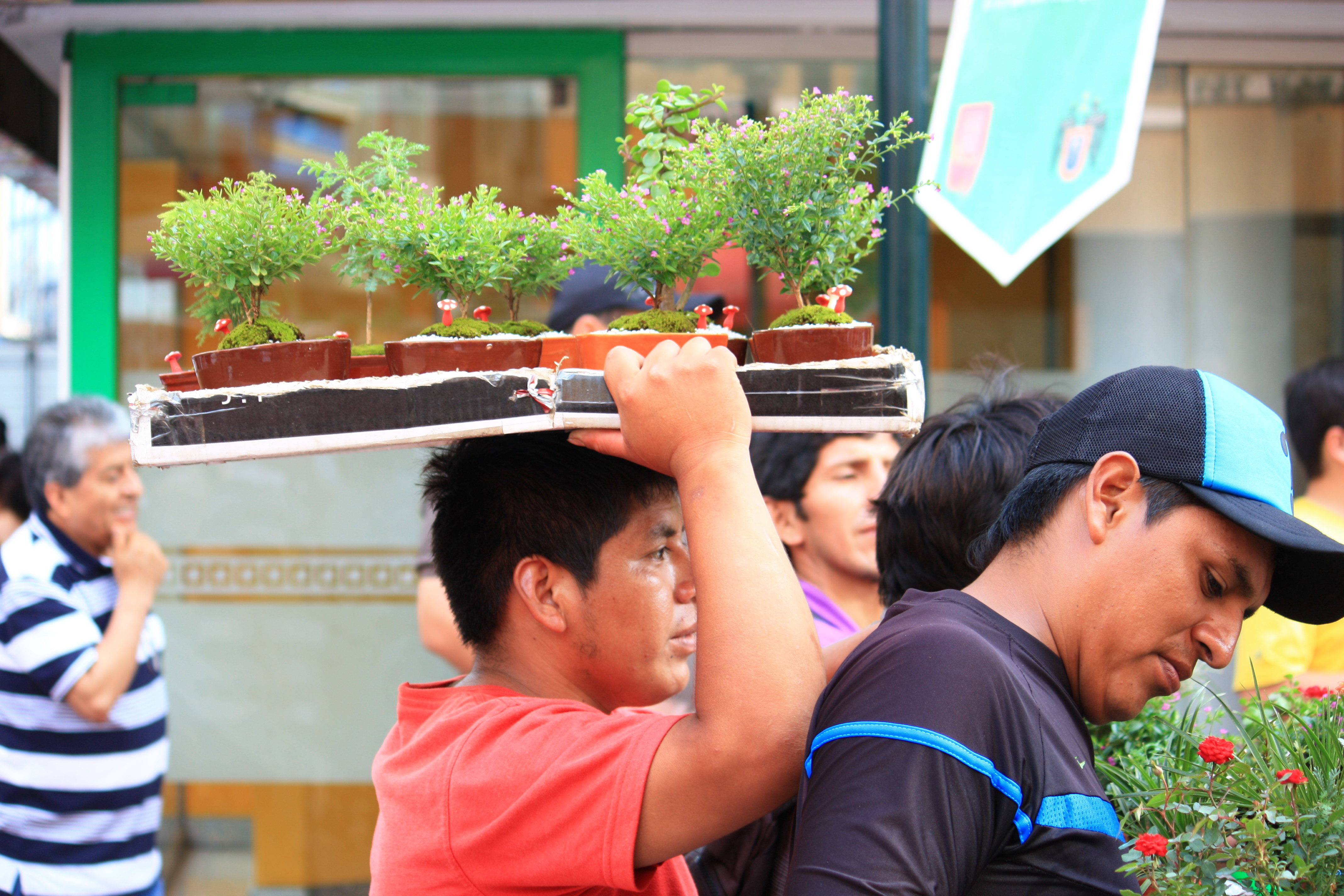 Side-shot of man holding miniature trees in Lima