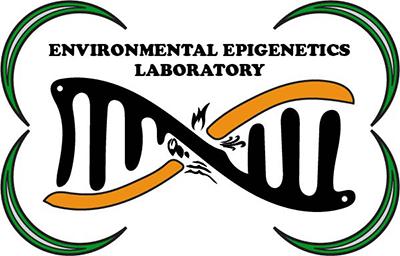 Epigenetics laboratory