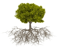 Tree Root, 3D Render Illustration