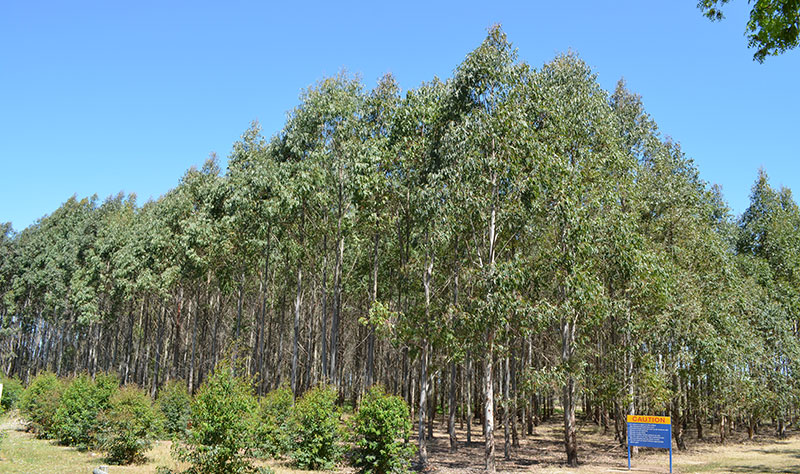 The Hawkesbury Forest experiment and the Whole Tree Chambers for precise climatic control and experimentation of full height trees