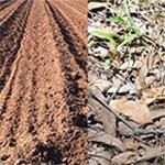 Diverse Soil Types