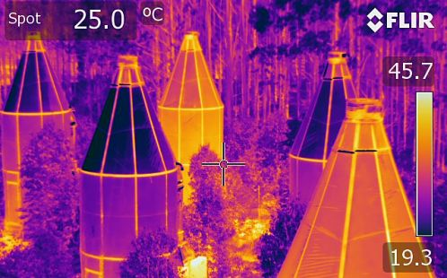 Whole Tree Chambers Thermal Image