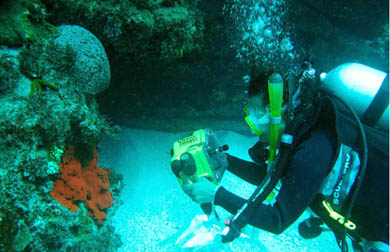 Dr Anya Salih diving on a coral reef off Lord Howe Island.