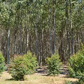 Hawkesbury Forrest