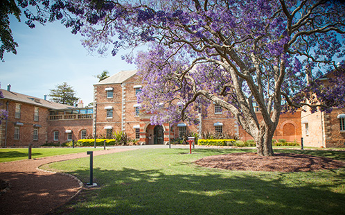 Female Orphan School and jacaranda in bloom