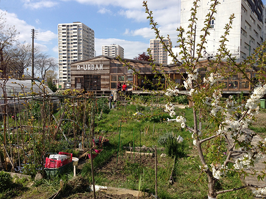 A green community garden against a backdrop of tall city buildings.