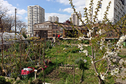 Thumbnail image of a community garden in an urban setting.