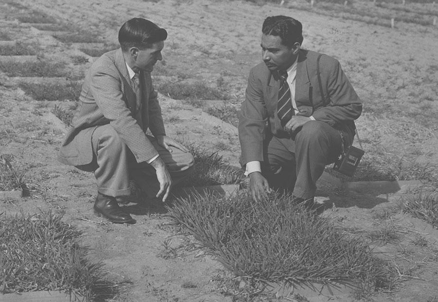 Men inspect turf grass trials in 1950.