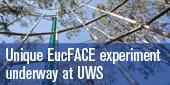 EucFACE experiment