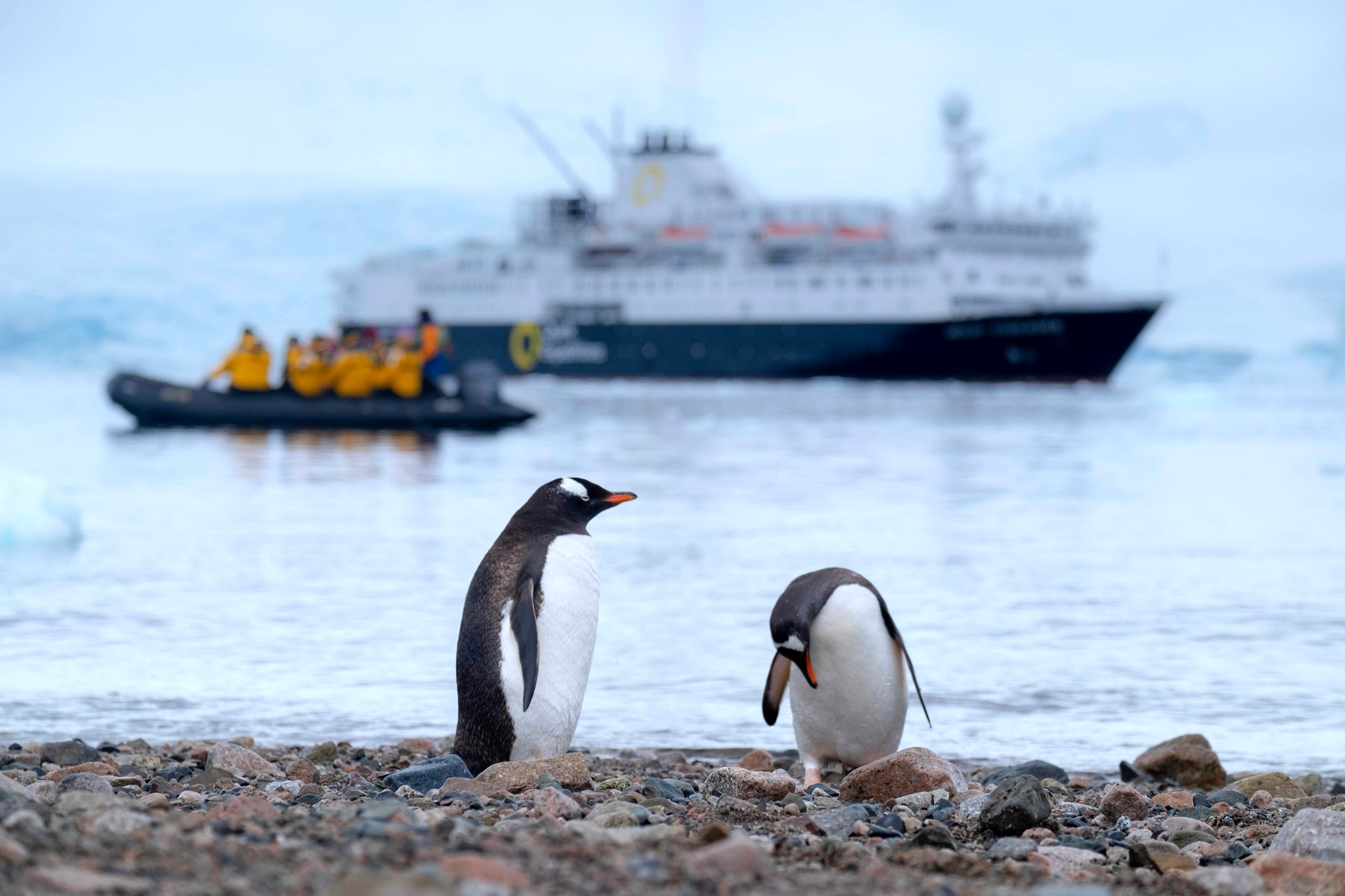 Penguins with ship in background